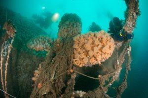Dive the North Sea Clean