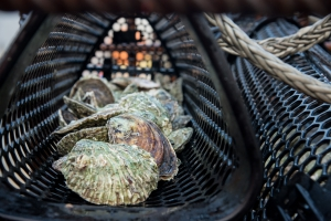 Oysters in a wind farm in the North Sea | © Udo van Dongen
