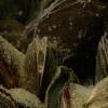Mussels create biodiversity