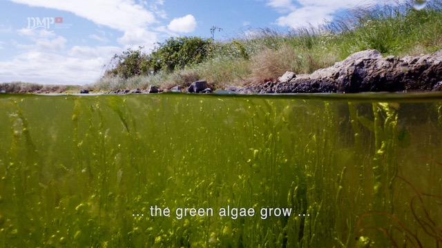 Seaweed is vital