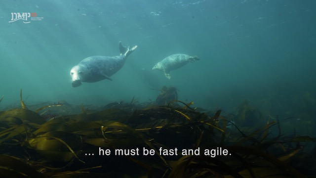 Seals are learning as they play